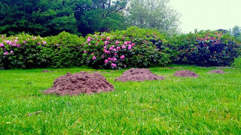 Mollen in de tuin