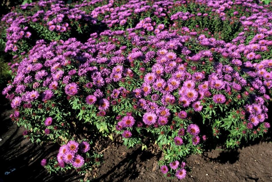 Vaste Planten Tuin : Winterharde vaste planten