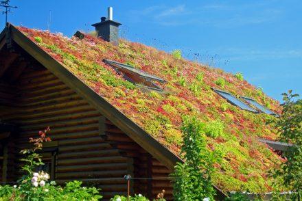 Voordelen groen dak