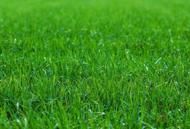groen gazon